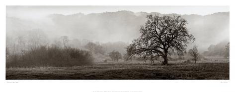 Meadow Oak Tree Art Print