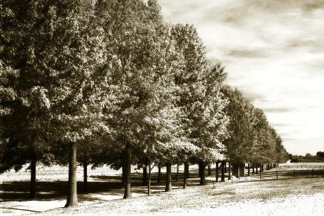Plantation Road 1 Valokuvavedos