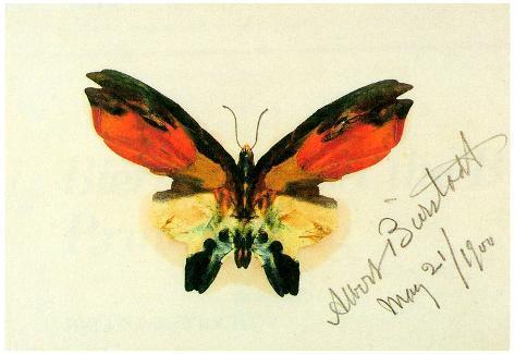 Albert Bierstadt Butterfly 2 Art Print Poster Poster