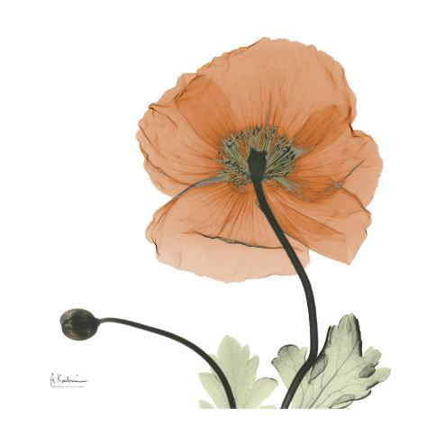 A Gift of Flowers in Orange Art Print