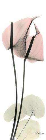 Anthurium in Pink Art Print