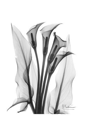 Calla Lily Quad in Black and White Art Print