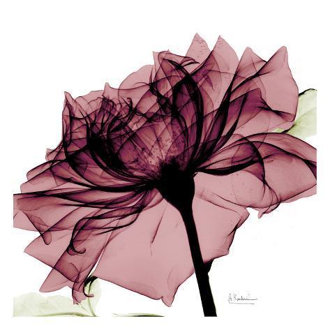 Chianti Rose Art Print