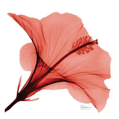 Close Up of Red Beauty II Art Print