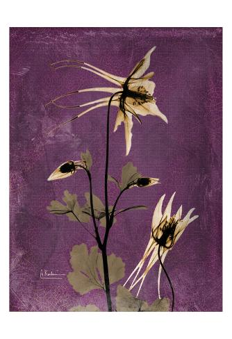 Albert Koetsier Framed Prints