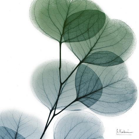 Dull Eucalyptus Impressão artística