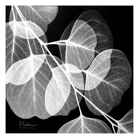Eucalyptus Black and White Impressão artística