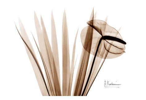 Flamingo Plant in Brown Art Print