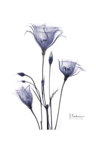 Gentian in Purple Art Print