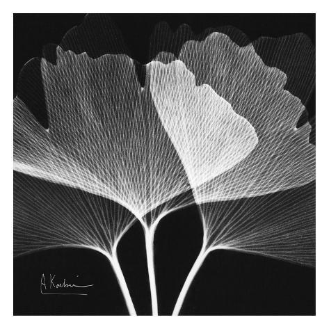 Ginkgo Close Up Black and White Impressão artística