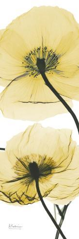 Iceland Poppy Yellow Stampa artistica