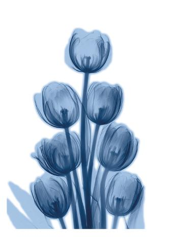 Indigo Spring Tulips Taidevedos