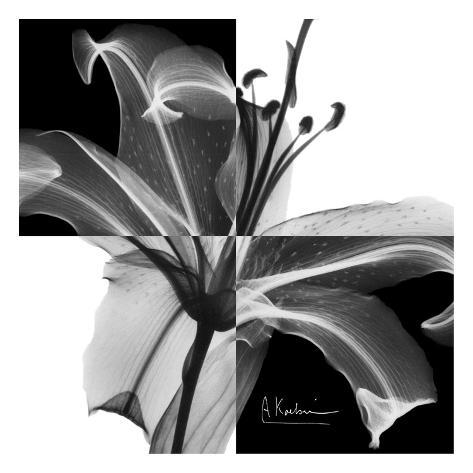 Lily Black and White on Squares Art Print