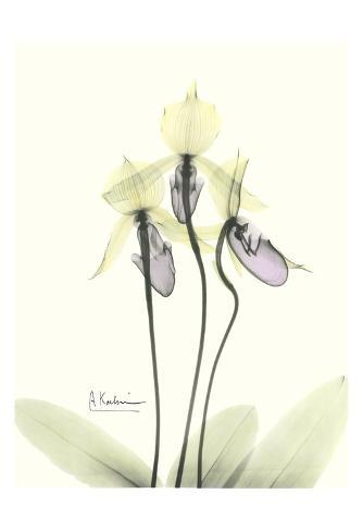 Lovely Orchids II Art Print