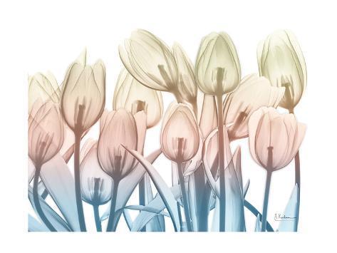 Magical Garden 2 Stampa artistica