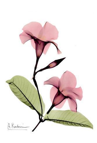 Mandelilla in Color Art Print