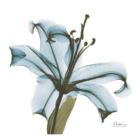 May Lily Art Print