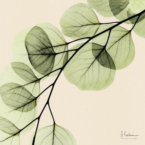 Mint Eucalyptus 1 Stampa artistica