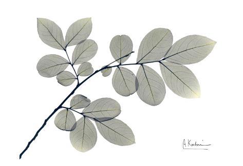 Myrtle Tree in Green Art Print