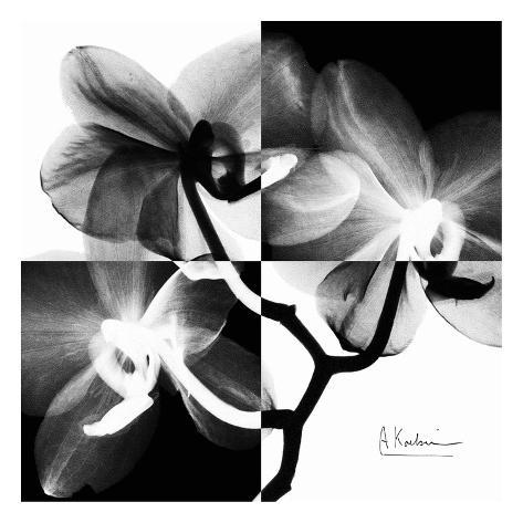 Orchid Black and White on Squares Art Print