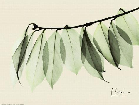 Sage Eucalyptus Leaves I Art Print