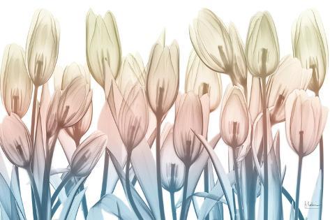 Spring Blooms Stampa artistica