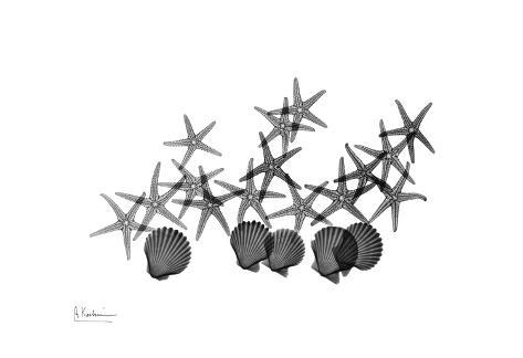 Star Fish And Shell Group in Black and White Art Print