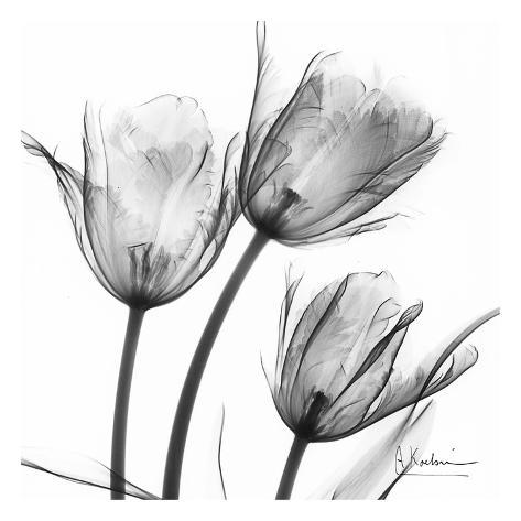 Three tulips in black and white print