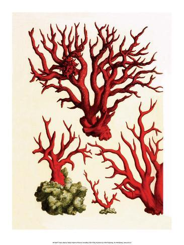 Red Coral, Cabinet Of Natural Curiosities (1734 1765)