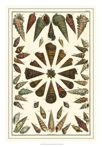 Seba Shell Collection II Giclee Print