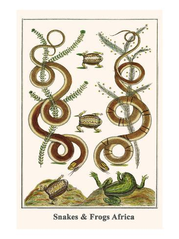Snakes and Frogs Africa Art Print