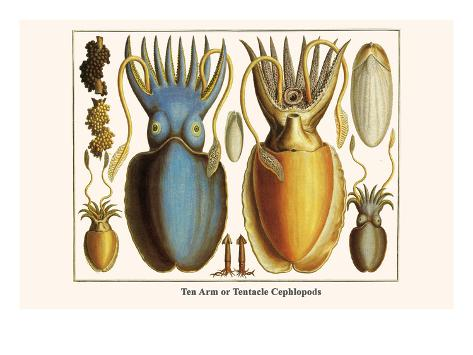 Ten Arm or Tentacle Cephlopods Art Print