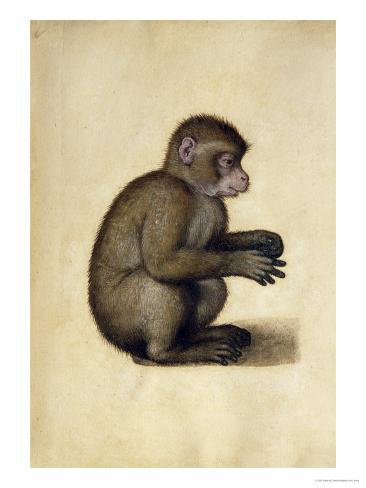 A Monkey Giclee Print