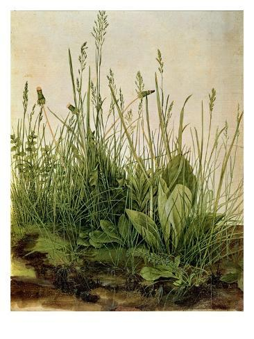 Great Piece of Turf - Study of Weeds, 1503 (W/C and Bodycolour on Vellum) Giclee Print