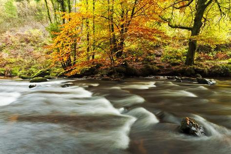 The River Teign and Whiddon Wood in Autumn. Photographic Print
