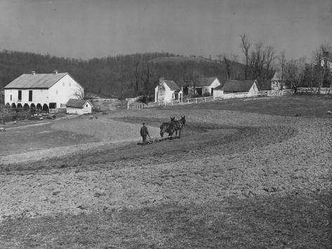 Farmer Plowing Field at