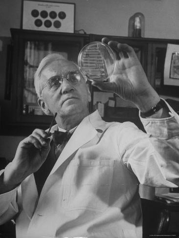 Portrait of Bacteriologist Alexander Fleming at Work Premium Photographic Print