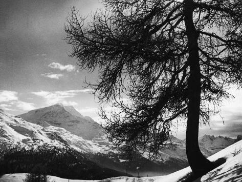 Tree on Alpine Slopes of Winter Resort. Peak in Background in Piz Corvatsch Fotoprint