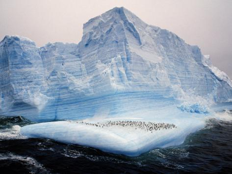 Scotia Sea, Chinstrap Penguins on Iceberg, Antarctica Photographic Print