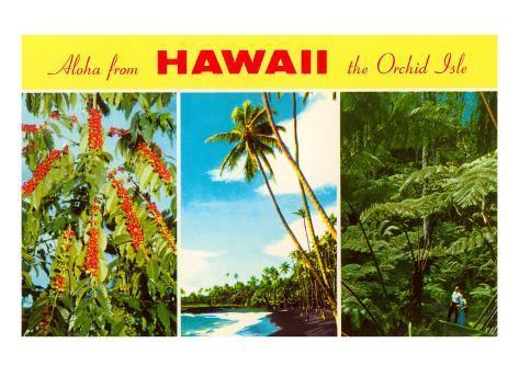 Aloha from Hawaii Art Print