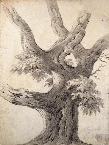 Study of a Tree, 1823 Giclee Print
