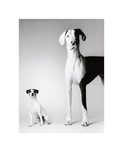 Domino and Daisy Giclee Print
