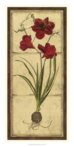 Amaryllis Panel I Giclee Print
