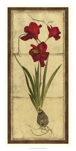 Amaryllis Panel II Giclee Print