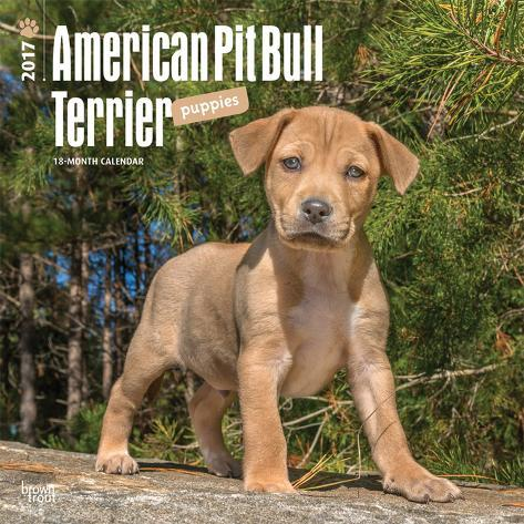 Pin by Marvin Brown on American pit | American pitbull ...  |American Pit Bull Terrier Vintage