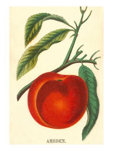 Amsden Peach Taidevedos