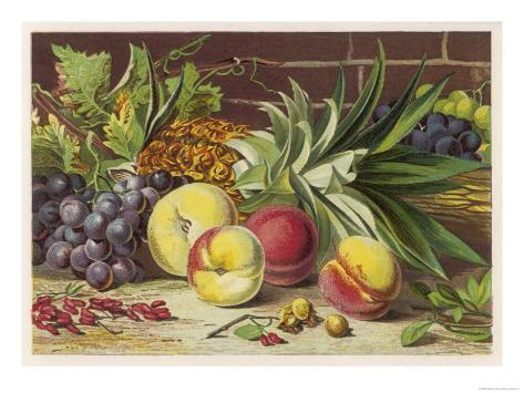 An Attractive Display of Peaches Grapes and a Large Pineapple Giclee Print