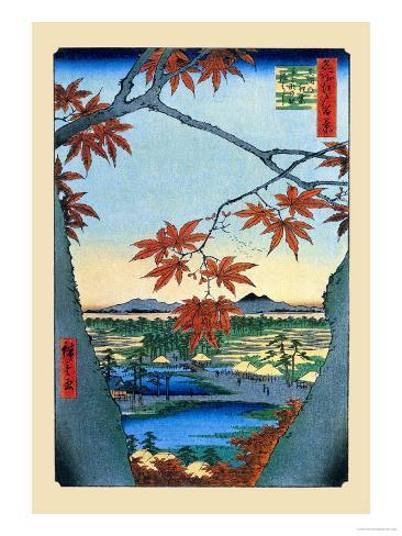 The Maple Trees Art Print