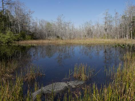 Everglades National Park, UNESCO World Heritage Site, Florida, USA, North America Photographic Print