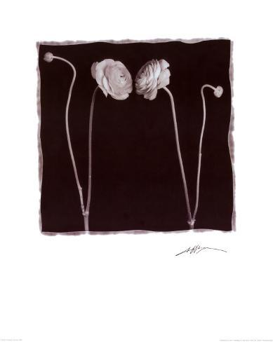 Two Flowers and Two Buds Art Print